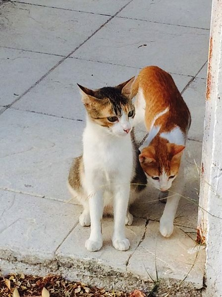 Greek stray cats jpeg